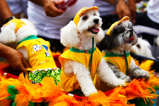 Dogs wear Brazil's national soccer team jerseys. ?Photo by Reuters