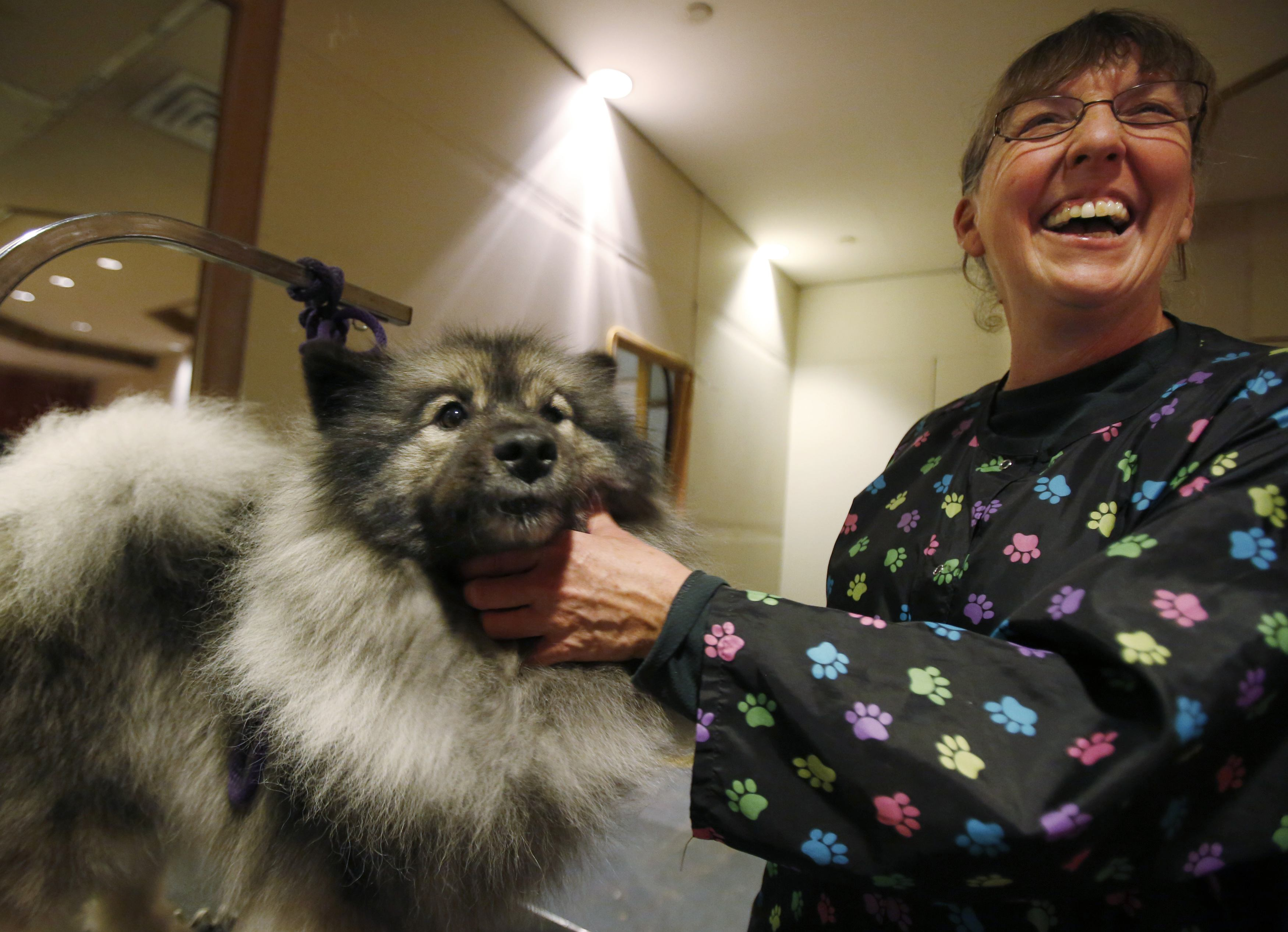 Bonnie Hammond Brown grooms her dog at the dog spa at the Hotel Pennsylvania in advance of the Westminster Dog Show in New York, February 10, 2013.   REUTERS/Carlo Allegri  (UNITED STATES - Tags: SOCIETY ANIMALS)