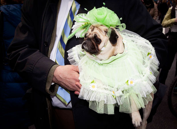 Dog Chloe takes part in the Easter Bonnet Parade too.