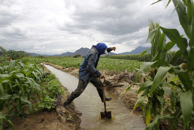 Farmer Julian Julca jumps a canal while irrigating his crops after a rare rain in the outskirts of Olmos in Peru's northwestern region of Lambayeque, in this March 14, 2013 file photo. Peru's Olmos Valley might be a desert now, with rare rains and rivers that trickle to life for just a few months a year, but a radical engineering solution for water scarcity could soon create an agricultural bonanza here. Fresh water that now tumbles down the eastern flank of the Andes mountains to the Amazon basin and eventually th