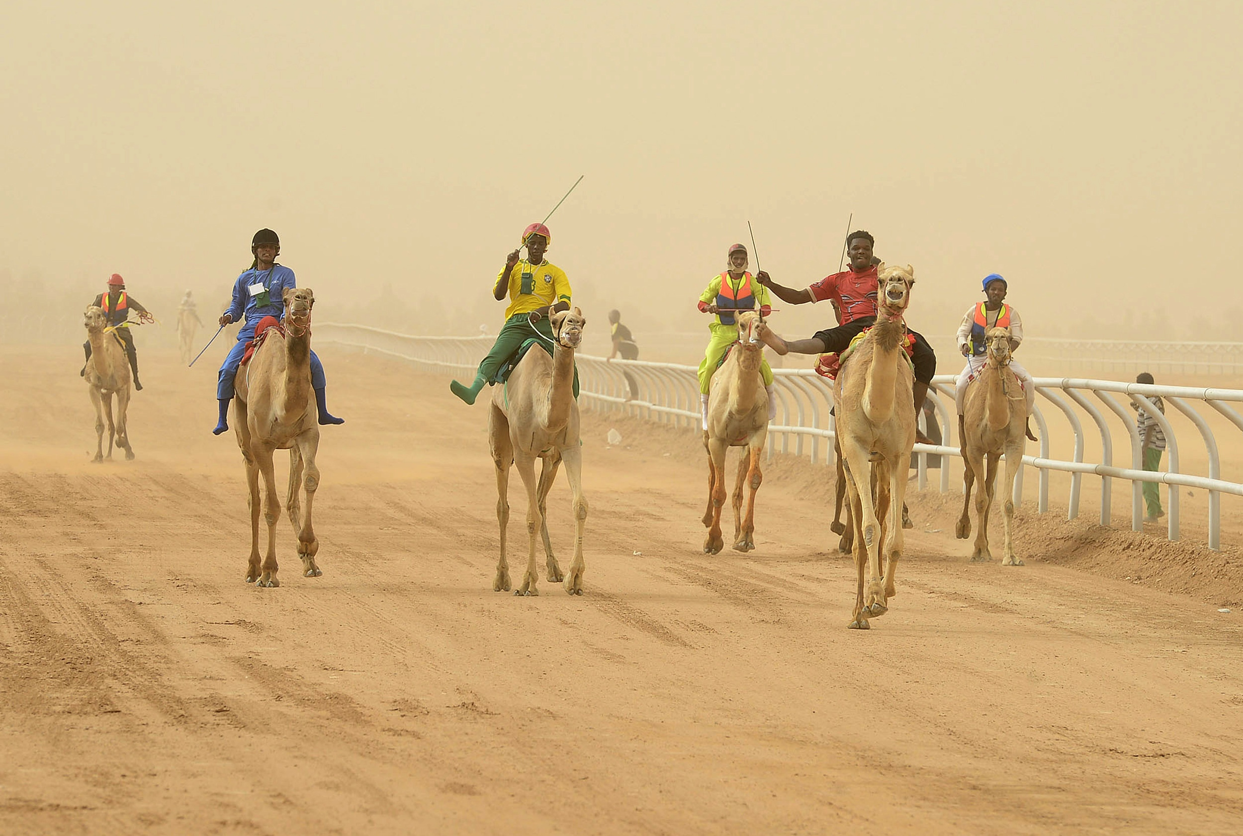 Jockeys race to the finish line during the 20km camel race at the opening of the Janadriya festival near Riyadh.