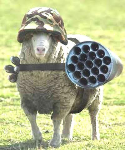 Terrorist_sheep