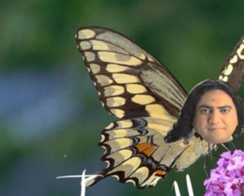 'I'm like a butterfly …'