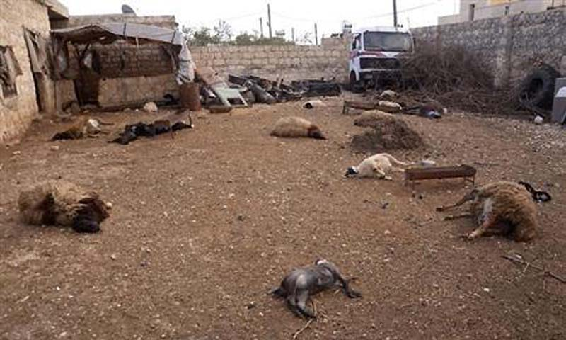 Animal carcasses lie on the ground, killed by what residents said was a chemical weapon attack on Tuesday, in Khan al-Assal area near the northern city of Aleppo, March 23, 2013.—File  Photo by Reuters