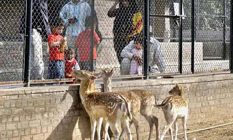 Some visitors were seen throwing eatables into animal cages. -File photo
