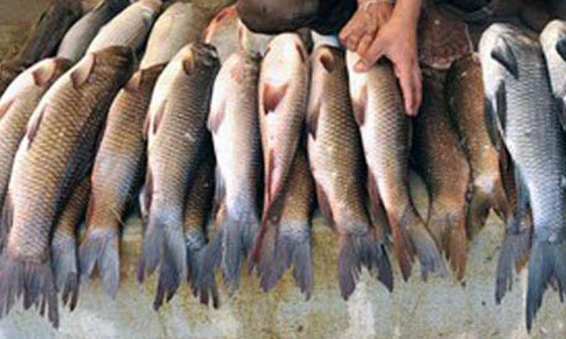 Big rise in fish exports newspaper dawn com for Fish for diabetics