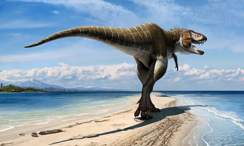 New dinosaur species discovered - Newspaper - DAWN.COM