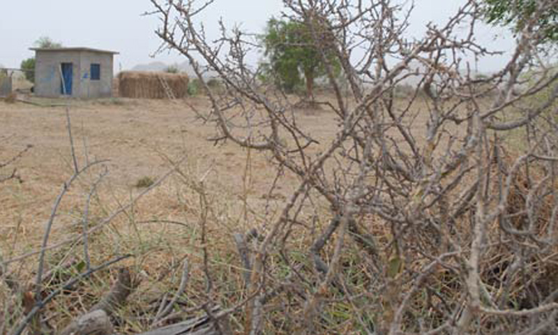 More than 100 people have died because of famine and malnutrition in Thar. – File Photo by Hussain Afzal