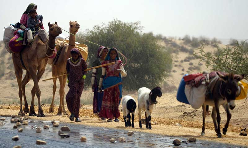 Villagers lead livestock from the drought-hit Tharparkar district in southern Sindh provinceon March 11, 2014. – AFP Photo