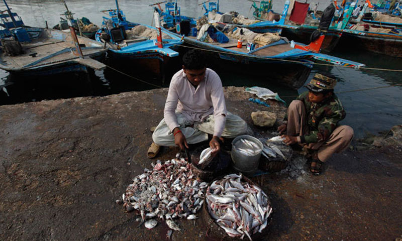 Fishermen cleaning fish by the harbour at Ibrahim Hyderi. — Photo by Reuters