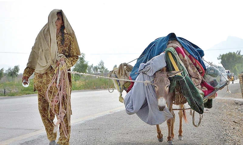 A lone woman displaced from North Waziristan arrives in Bannu with her most valuable possession — a donkey. — Dawn