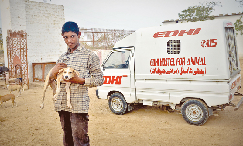 Image result for Edhi Animal SHelter