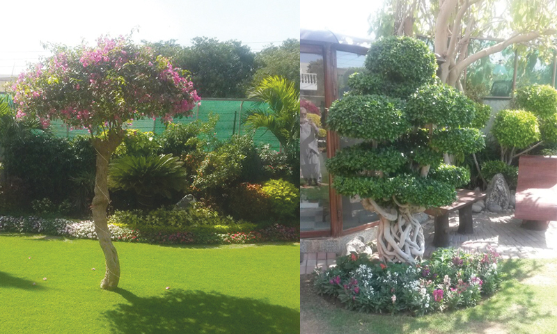 Signature Dr Imran Afzal: another pristine garden that excites and delights in equal measure