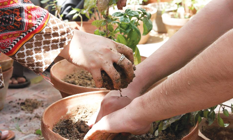 Crafting a new relationship: clients build a sense of self and awareness through horticultural activity