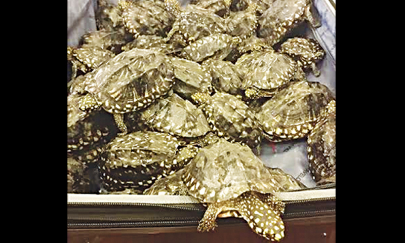 THE turtles seized on a Bangkok-bound flight.
