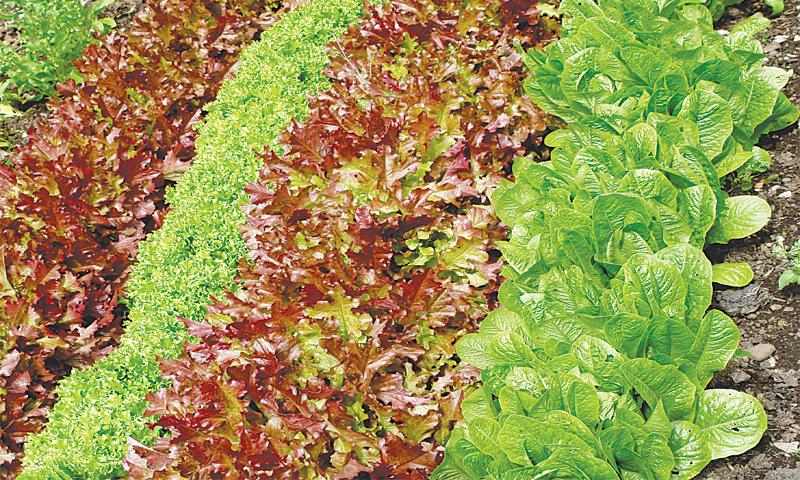 October herbs - Newspaper - DAWN.COM
