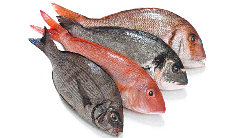 If they smell like fish it s too late newspaper dawn com for Breath smells like fish