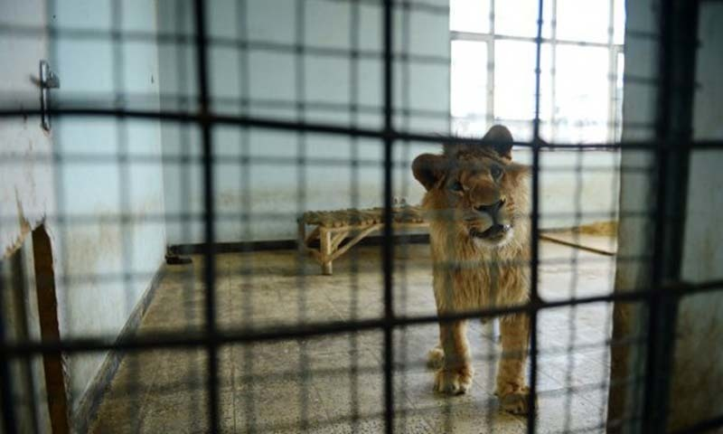 An area near Pakistan Forest Institute, which was selected for setting up the zoo, was not only accessible and suitable but would also help to make a Zoo bigger than Lahore Zoo, which was established over 24 acres.- AFP/file