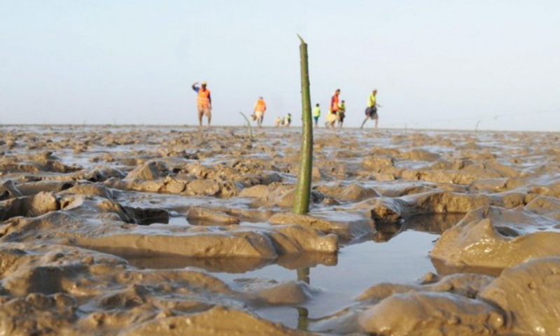 This picture shows village volunteers planting mangrove seedlings. — Reuters/File
