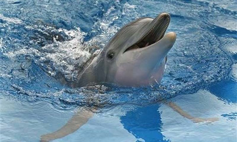 The species was  identified as a common bottlenose dolphin about seven feet long.—AP/File