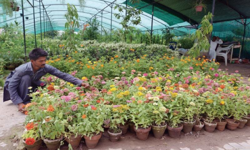 These Nurseries In Abad Offer A Variety Of Plants And Pots One The Pictures