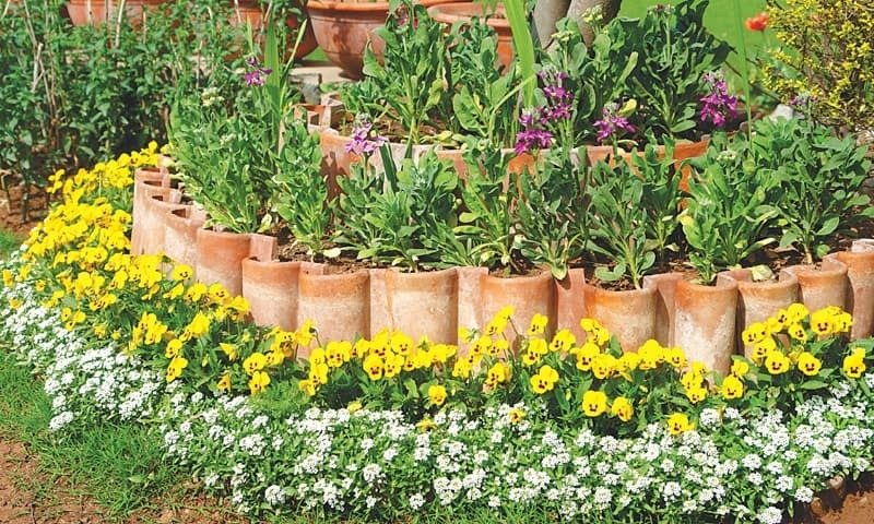 Artistic planting of alyssum, violas and stocks