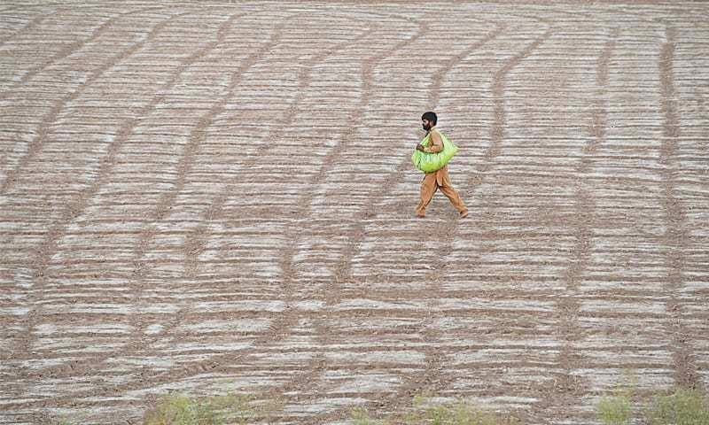 A farmer sowing seeds in his wheat field on the outskirts of Lahore.— M. Arif / White Star