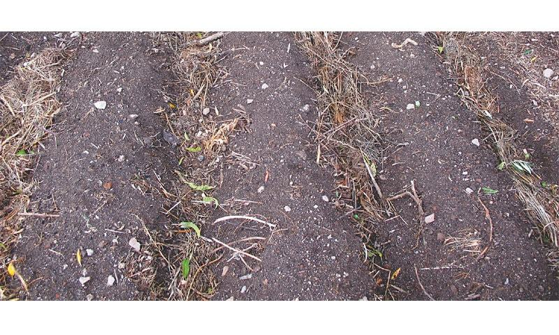 Mulched planting lines
