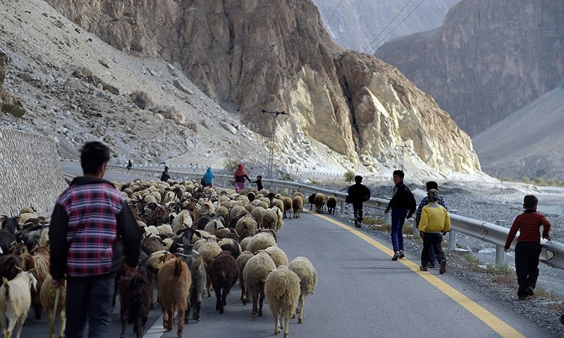 Local people control their sheep at the Karakoram highway in Gulmit village of Hunza valley in northern Pakistan. — AFP