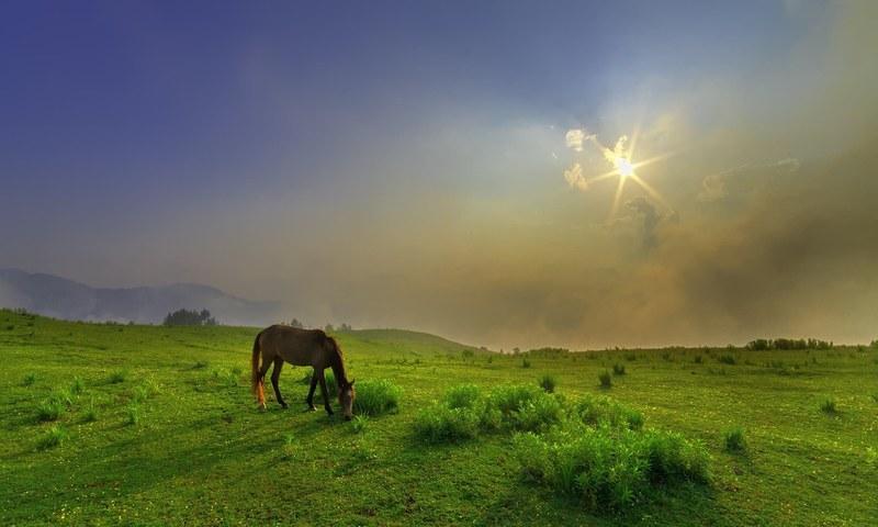 Paye meadows — S.M.Bukhari's Photography