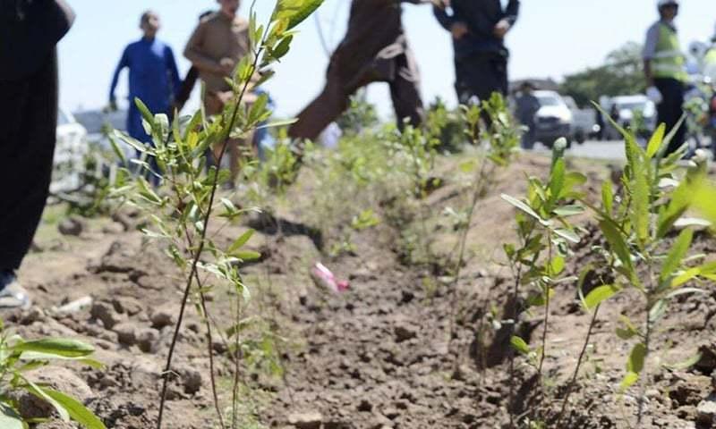 Plantation drive at Regi Model Town. —Photo courtesy PTI