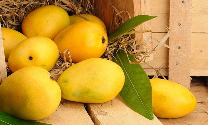 Exporters hope to sell 0 1m tonnes of mangoes - Pakistan