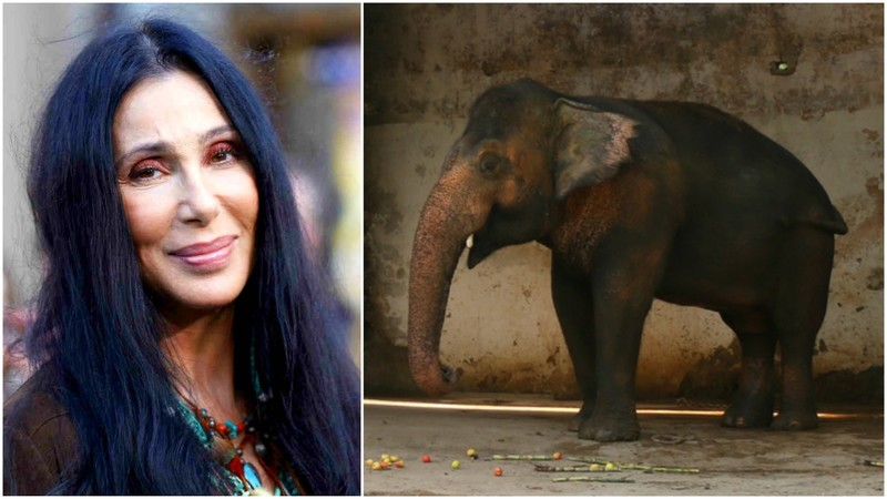 The plight of Kavaan, Islamabad's lonely elephant, has attracted international support - Kaavan photo courtesy Paws Pakistan