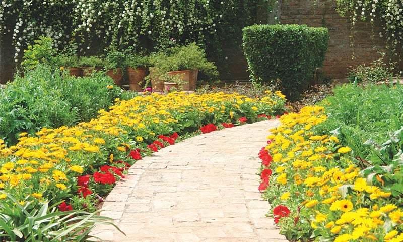 Yellow calendula & red petunia walkway