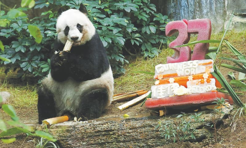 Hk Mourns Worlds Oldest Captive Giant Panda Newspaper Dawn