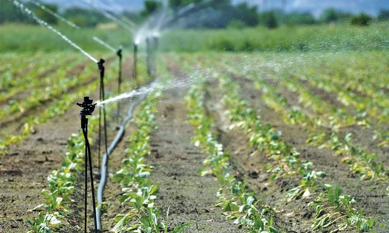 Sprinkler irrigation on agricultural land