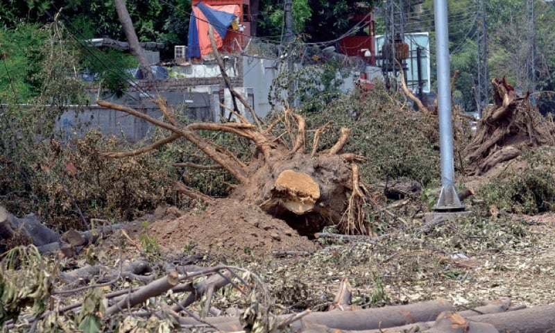 Cutting of trees on Jail Road. — White Star