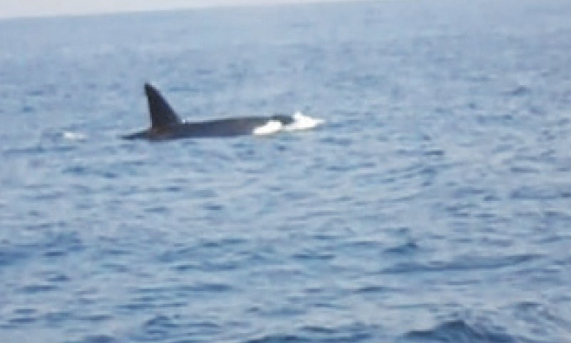 A SCREENGRAB of one of the whales spotted off Churna Island.