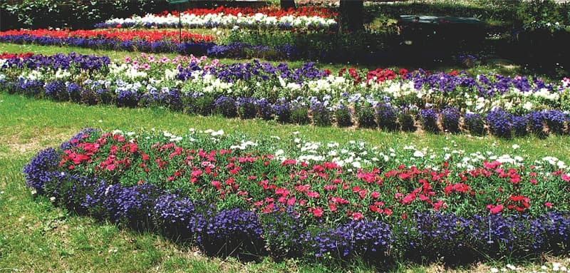 Minimum grass, maximum flowers