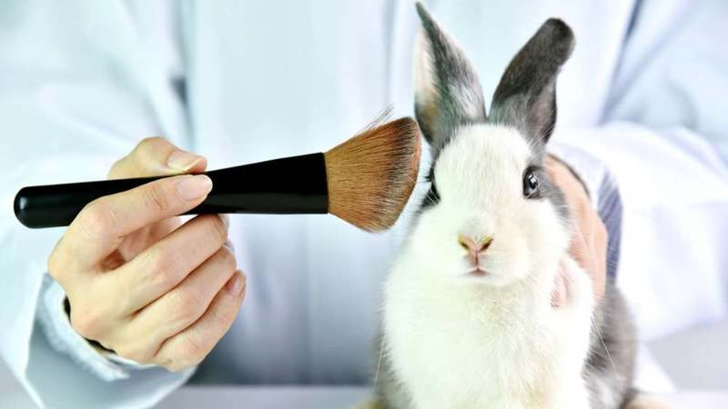 for and against animal testing