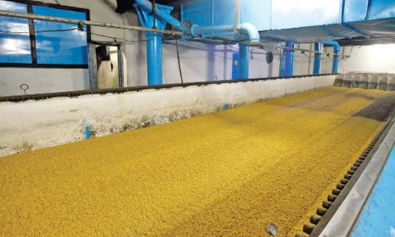 Barley is kept in a steep tank for three days for germination.