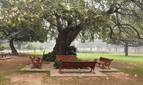 تم بہار تھی جاناں اور مجھے اپنا وجود تمہارے سامنے ایک بہت بوڑھے درخت کا سا معلوم ہوتا ہے—تصویر رمضان رفیق