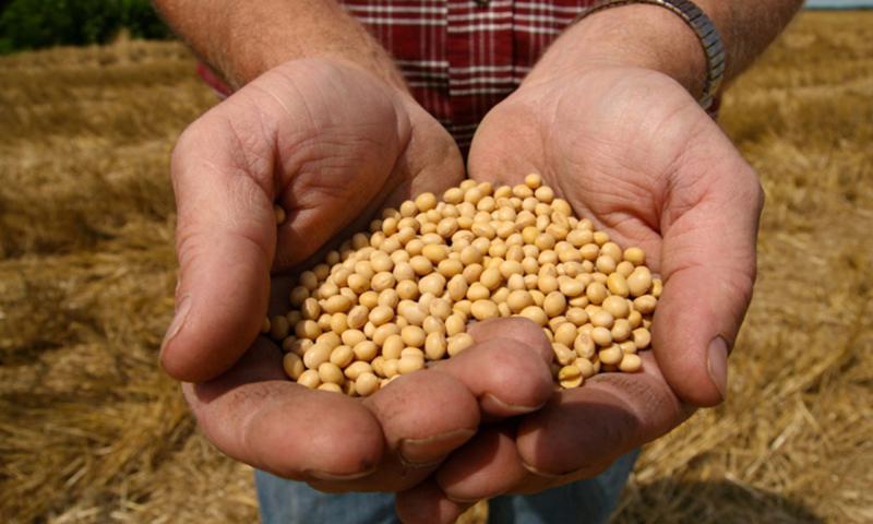 The first-ever index for South and Southeast Asia evaluated leading seed companies in the region. — AP/File