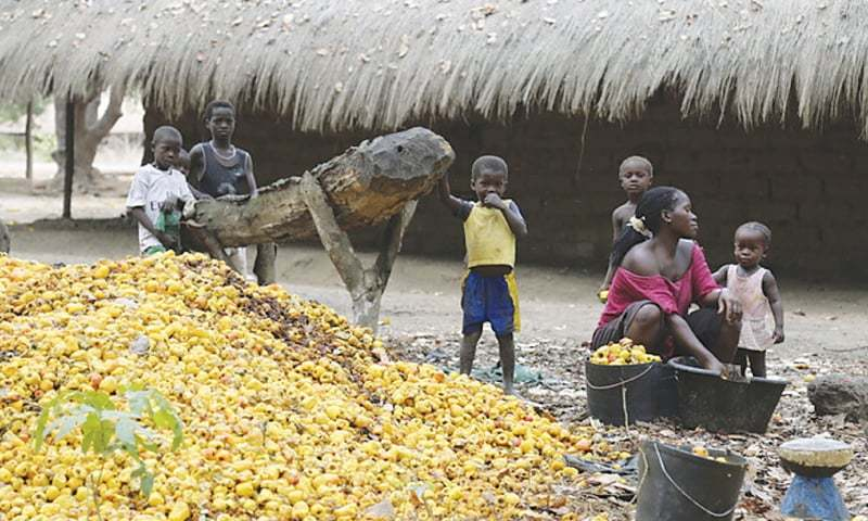 In this file photo, a woman from Guinea Bissau sorts through a pile of cashew nuts as her children look on.—Reuters