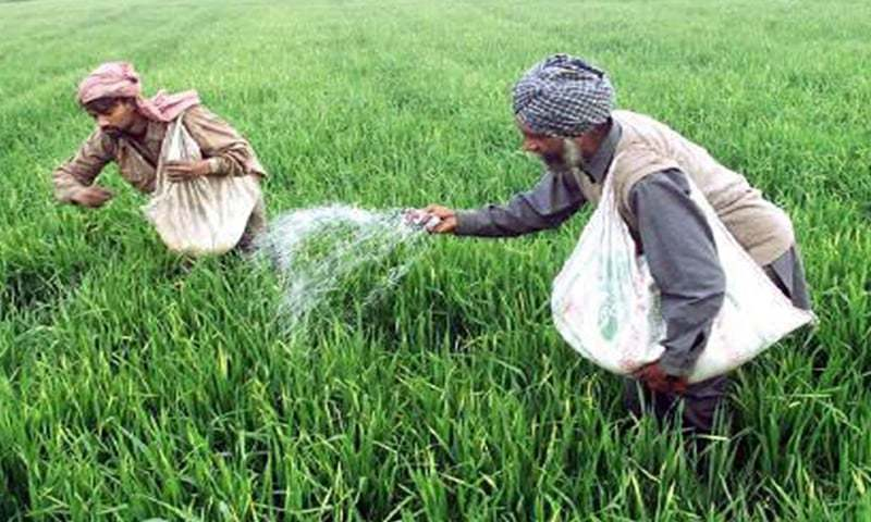 The government has been bearing a significant cost of imported urea. After the new price fixed by ECC, the subsidy will come out to be Rs845 per bag.