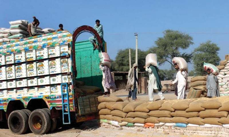 MULTAN: Labourers busy in loading wheat bags on a truck. The government is looking to export 500,000 tonnes of wheat. The higher bids received by Passco against its tender will help reduce the need for government subsidy.—APP