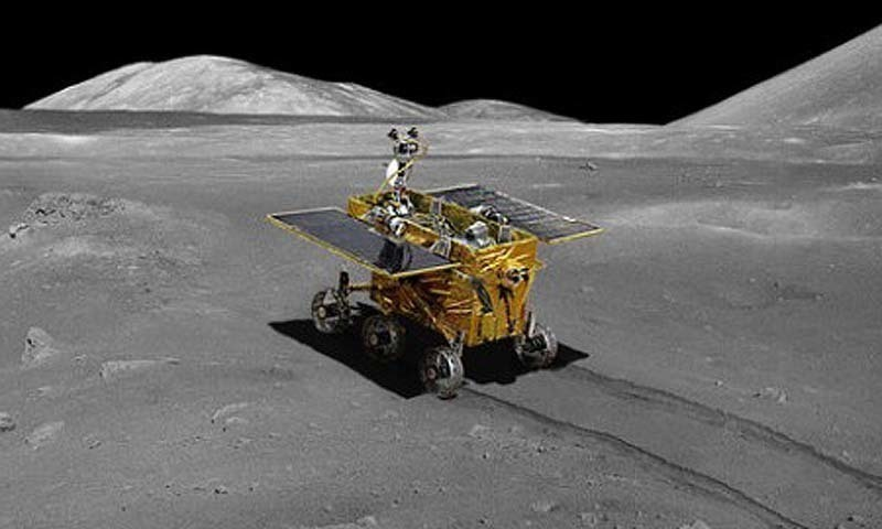 A cotton seed sprouted - and died - on China's Lunar Lander