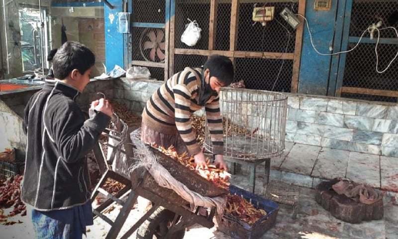A boy unloads chicken feet from a wheelbarrow in Peshawar. —Dawn