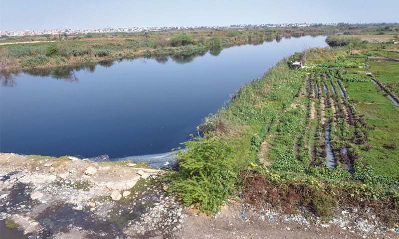 A SECTION of Malir riverbed, part of the proposed urban forest project, being used for growing vegetables with sewage.—Fahim Siddiqi/White Star.