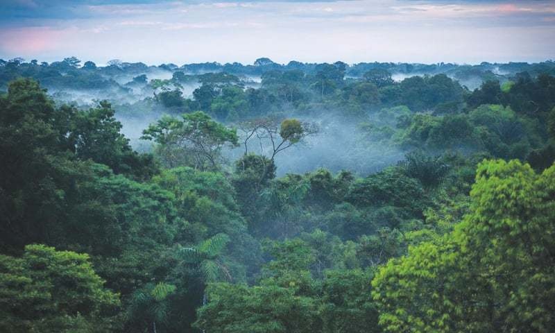 The researchers from Boston University found that global green leaf area has increased by 5 per cent in the new century, an area equivalent to all of the Amazon rainforest. — File